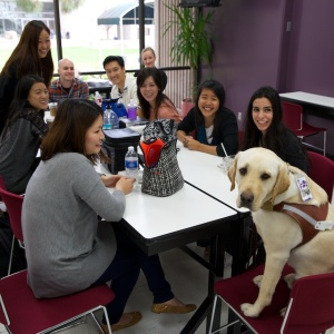 Pancho relaxing with SCCO optometry students in the Student Lounge