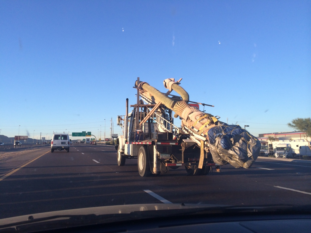 """This is how they move cactus in Arizona!"""